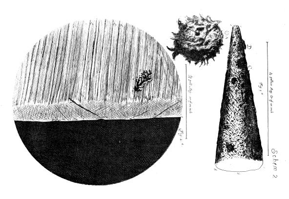 L0013028 Robert Hooke, Micrographia, needle-point.